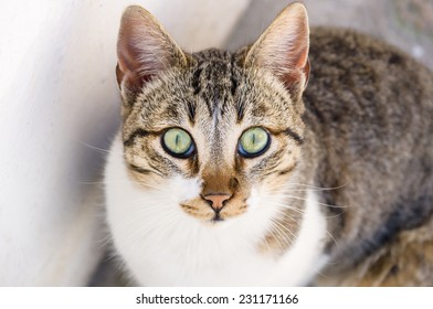 cat in a street
