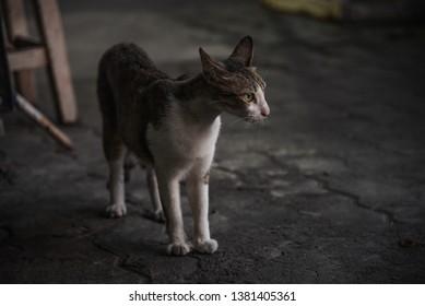 Cat Street in Thailand nontaburi