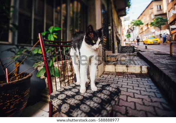 Cat stretching on a chair on the street. Turkey, lifestyle