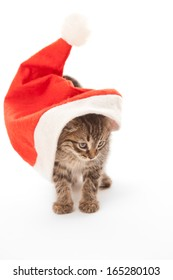 Cat stuck at Santa's hat on white