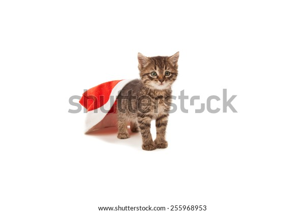 Cat stuck at Santa's red hat isolated on white