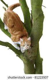 Cat stuck up in a tree