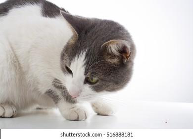 Cat in studio.