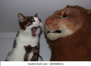Cat and stuffed lion argue
