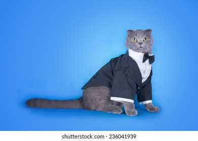 Cat In A Suit Isolated On Blue Background