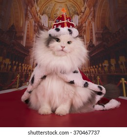 Cat in a suit of the king in his own castle