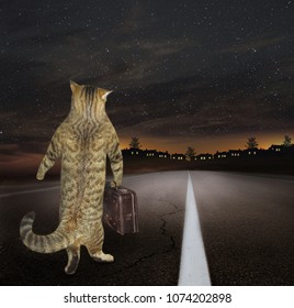 The cat with a suitcase returns home along the highway at night.