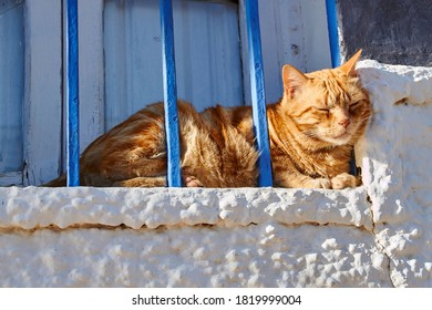 Cat sunbathing on the window sill of a whitewashed house with blue bars in Nerja, Spain