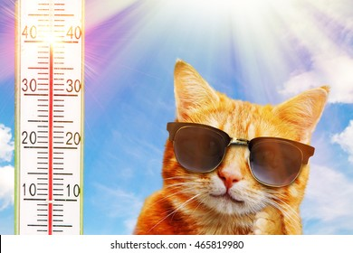 Cat with sunglasses on a very hot day