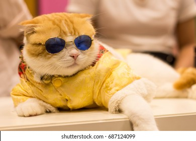 cat with sunglasses sleeping on top wood.