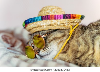 Cat. The cat in sunglasses and a sombrero sleeps on the bed.