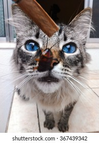 A cat surprised with the sight of a cockroach.