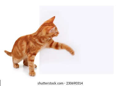 Cat swatting at empty space on sign for your copy text. Motion blur on cats paw to show action