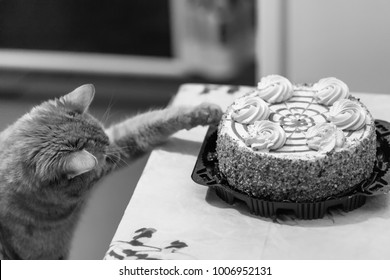 Cat Sweet Cake Lover