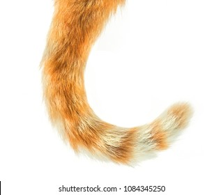 Cat Tail isolated on white background
