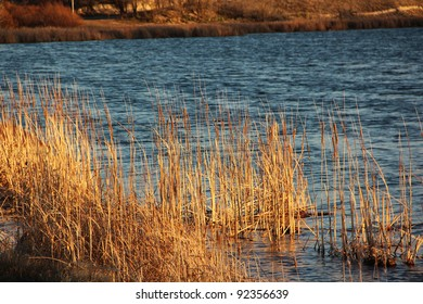 Cat Tails in Water of Lake at Sunset