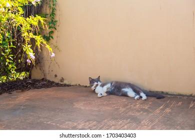 Cat Australia Images Stock Photos Vectors Shutterstock