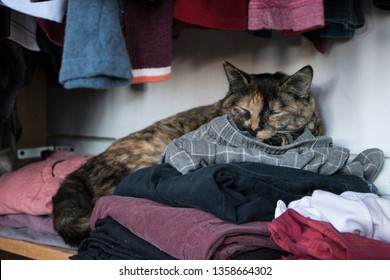 A cat takes a nap on a pile of clothes in a closet.