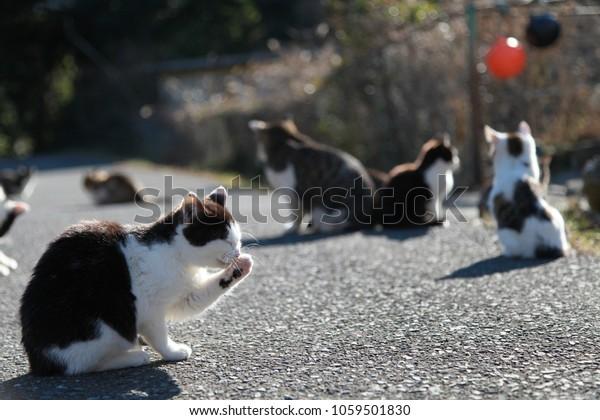 Chat sur l'île de Tashiro