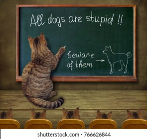 """The cat teacher wrote on a blackboard """"All dogs are stupid""""."""