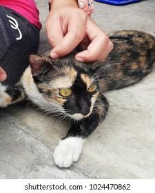 Cat thai, stray cat