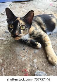 a cat in Thailand