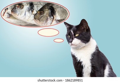 the cat thinks the fish in the speech bubble.