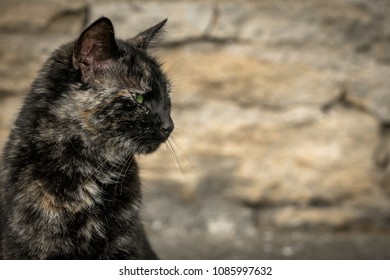 a cat with three colors and green eyes in profile