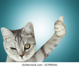 cat thumbs up