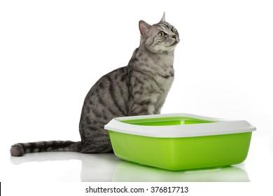 Cat with cat toilet