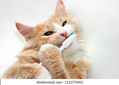 Cat and toothbrush  in bath tub