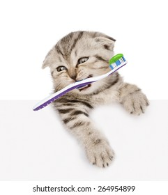 cat with a toothbrush peeking from behind empty board. isolated on white background