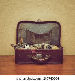 Cat of tortoiseshell color lying in a vintage small suitcase indoor