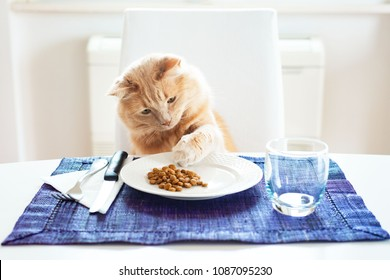 Cat touching with his paw dry food on a table set like a human