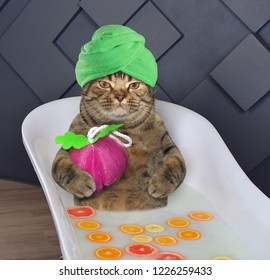 The cat with a towel around his head takes a milk bath with fresh fruits.