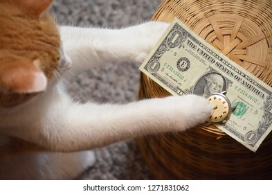 Cat Trading Time for Money