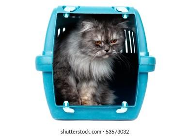 Cat in transport box