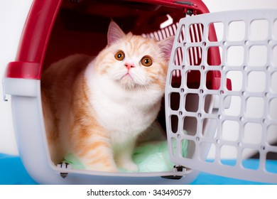 Cat in the transporter at a veterinary clinic