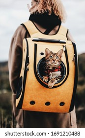 The cat travels in a backpack (carry) on the back of the owner on vacation. Cat in a backpack. Cat Porthole Backpack. Cat in the backpack with porthole.