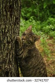 Cat Tree Hugger