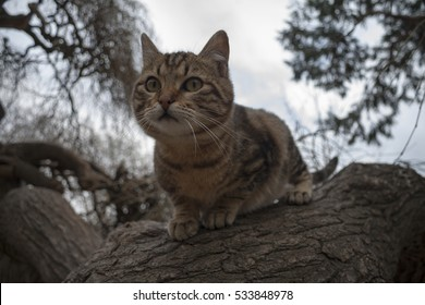 A cat in a tree ready to jump.