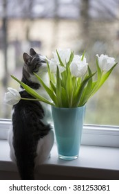 cat with tulips