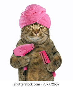 The cat in a turban is holding a comb and a hair dryer. White background.