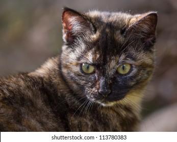 Cat turn around
