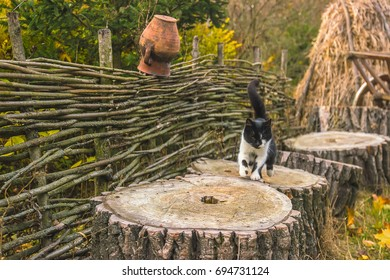 Cat at Ukrainian authenticity. Pots on a wicker fence.