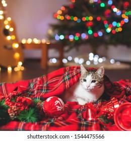 Gato Navidad Stocking Ginger Cat más razas /& Gatos Árbol De Navidad Santa Paws