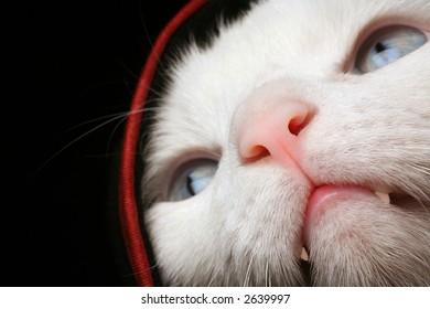Cat Under Cover, Hiding