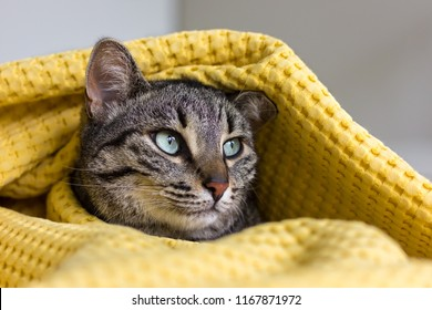 Cat under a yellow blanket, head close up