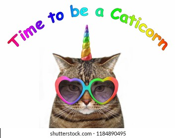 The cat unicorn is wearing cute glasses. Time to be a caticorn.