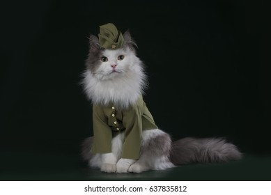 A cat in the uniform of a soldier
